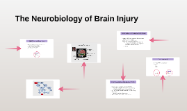 The Neurobiology of Brain Injury