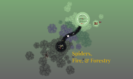 Spiders, Fire, n Forestry