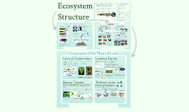 Copy of AP Bio- Ecology 4: Ecosystem Structure