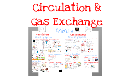 Copy of AP Bio - Circulation and Gas Exchange