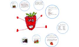 Copy of Alberta Strawberries
