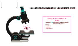 Copy of HONGOS FILAMENTOSOS Y LEVADURIFORMES