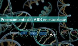 Copy of Procesamiento del ARN en eucariotas