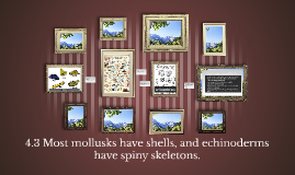 4.3 Most mollusks have shells, and echinoderms have spiny skeletons