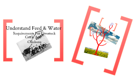 Feed & Water Requirements For Farm Livestock