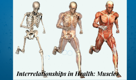 Interrelationships in Health: Muscles