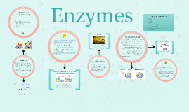 Copy of Enzymes