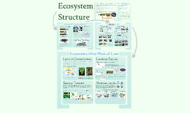 AP Bio-Ecosystem Structure