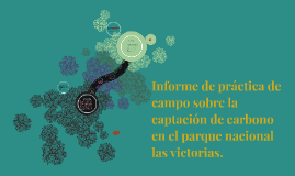 Copy of Informe de práctica forestal sobre la captación de carbono e