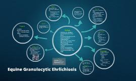 Equine Granulocytic Ehrlichiosis