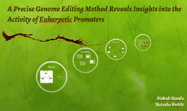A Precise Genome Editting Method Reveals Insights into the A