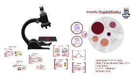 Anemia Megaloblásica