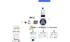 Biology - DNA/RNA Transcription/Translation