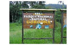 Goffin Gorgona