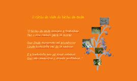 O ciclo de vida do bicho da seda
