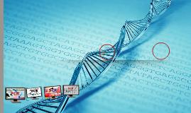 PCR HAMOODI