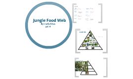 Jungle Food Web
