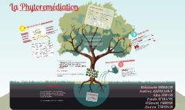 Réhabilitation des sols pollués : la phytoremédiation