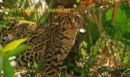 Ocelot (Leopardus  Pardalis