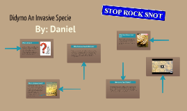 Didymo a invasive specie