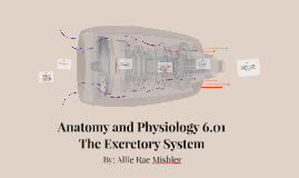 Anatomy and Physiology 6.01
