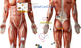 Spinal Cord Final