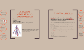 EL APARATO CIRCULATORIO O CARDIOVASCULAR