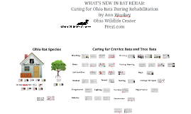 OHIO BATS: Caring for Crevice Roosting species and Tree Roos