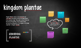 Copy of kingdom plantae