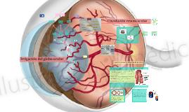 Copy of Irrigación del globo ocular y sus anexos