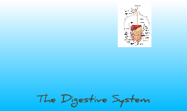 THE GAME, jk The Digestive System
