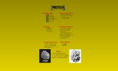 Protista