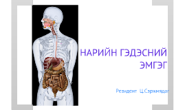 Copy of Copy of Copy of Copy of Copy of intestine