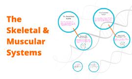 The Respiratory & Cirrulatory Systems