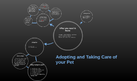 Adopting and Taking Care of your Pet