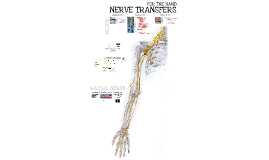 MACKINNON - 2016 CRN - Nerve Transfers for the Hand - Part 1 - Introduction and Radial Nerve