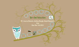 Copy of Barn Owl Relocation---Biology