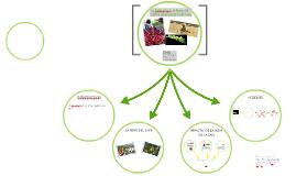 La Caficultura, la Roya del Café y su impacto en la SAN