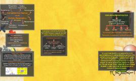 Competencias Básicas en el Ámbito Matemático