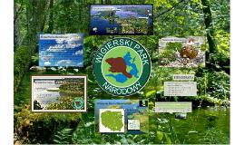 Copy of Wigierski Park Narodowy
