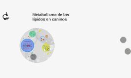 Copy of Metabolismo de los lípidos en caninos