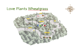 Love Plants Wheatgrass