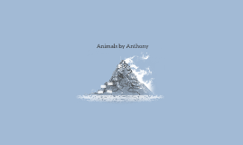 animals by anthony