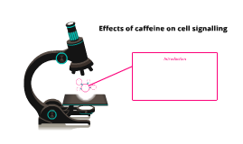 Effects of caffeine on cell signalling
