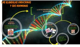 las glandulas endocrinas