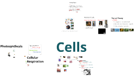 Cells and Cellular Energetics