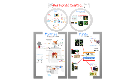 Endocrine System and Hormones