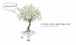 Is there a tree older then me?