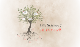 Life Science 7