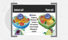 Grade 8 cell organelles
